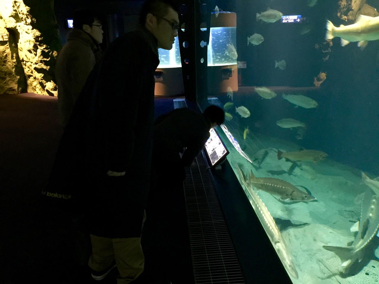 千歳水族館で実験